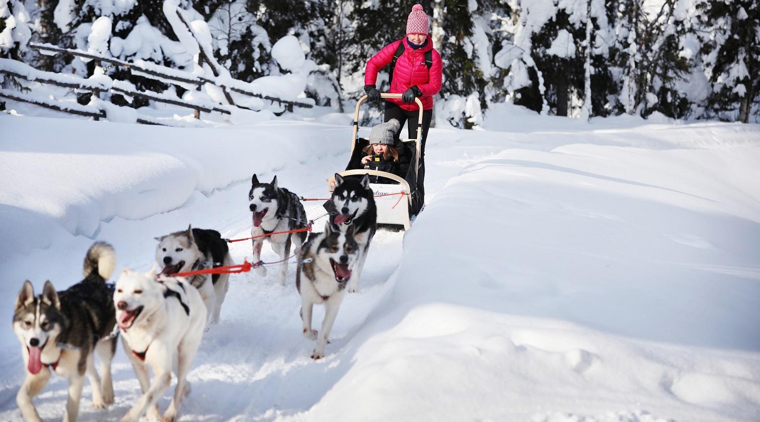 aventura huskies iso syote