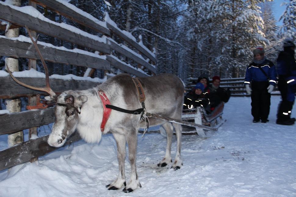 Amaya S Diciembre Arctic 2016