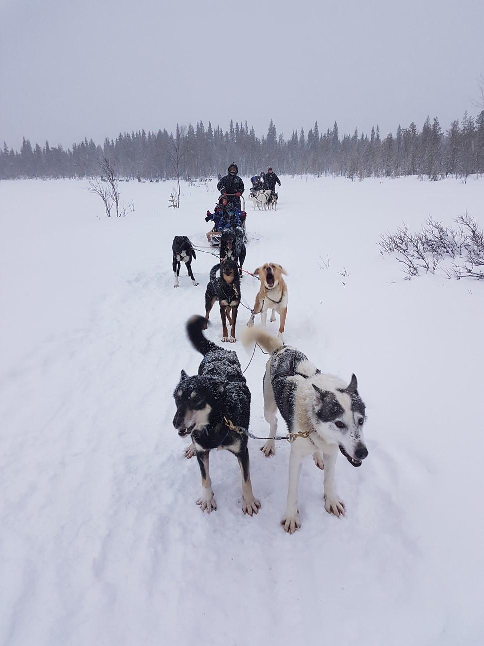 Anabel D Arctic Fin de Ano 2016