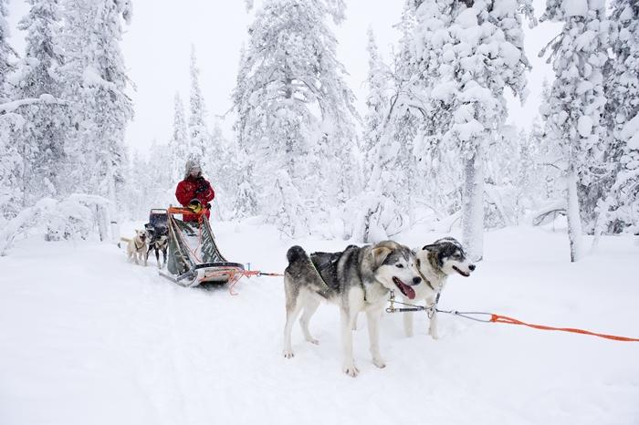 arctic huskies dic