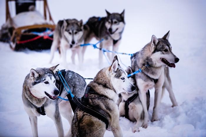 huskies salla 700