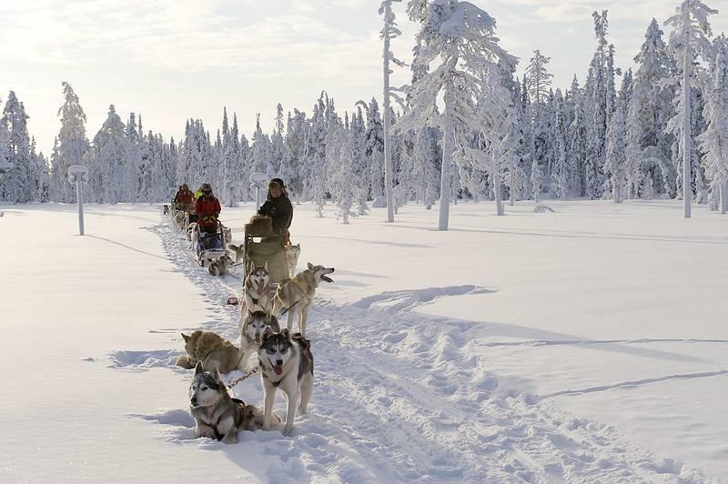viajes a laponia con hijos excursiones saariselka