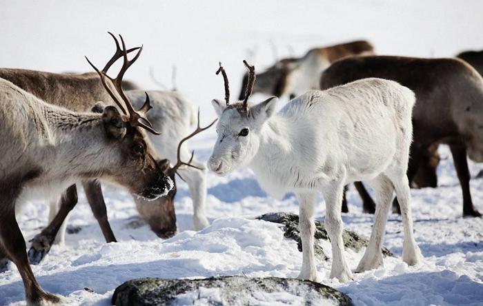 viajes a laponia con peques arctic circle diciembre